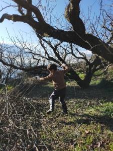 木の枝を集める