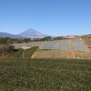 富士山 落合ハーブ園